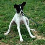 morguefile-file000152569242-dog-resisting.jpg
