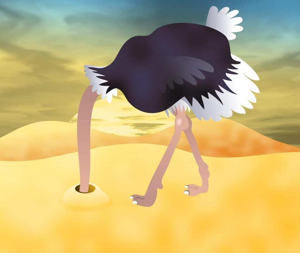 morguefile-ostrich.jpg
