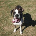 pixabay-dog-1598915_1280-loyalty.jpg