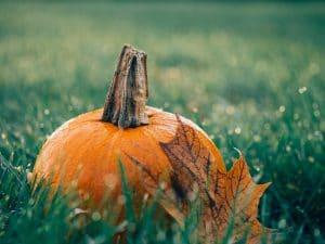 pixabay-pumpkin-1030817_1920-seasonal-wellness-marketing.jpg
